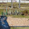 Dungeness Beach 22-02-14  011