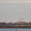 Heybridge Basin 08-01-13  013