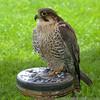 Jousting - Watham Abbey 21-08-10   013