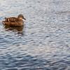 Lake District 01-07-17  0016