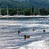 Lake District 01-07-17  0014