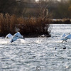 Lee Valley 30-12-12  001