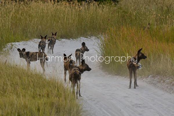 Blog Photos -Botswana 2016
