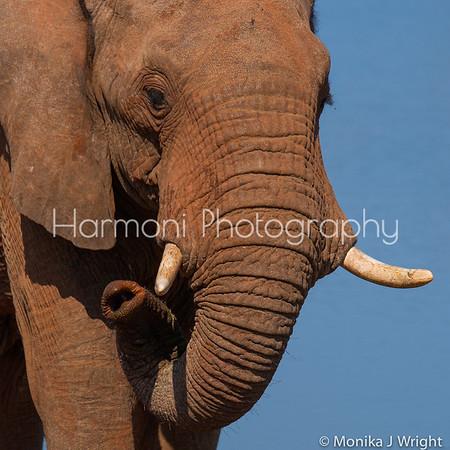 Harmoni-Photography Botswana and S.Africa 2016