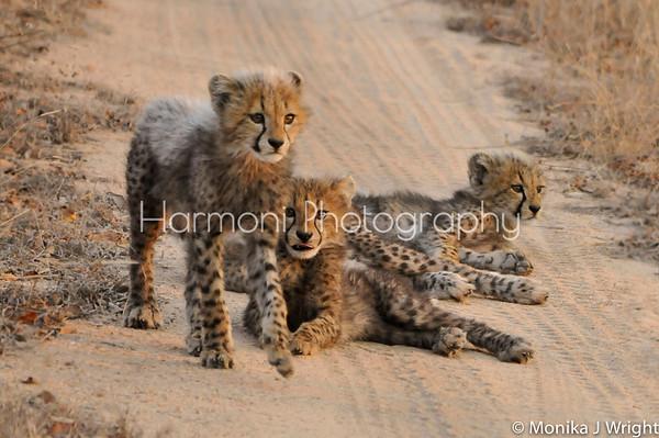 Kruger National Park 2013 -  Harmoni Photography