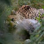 harmoniphotography's photo