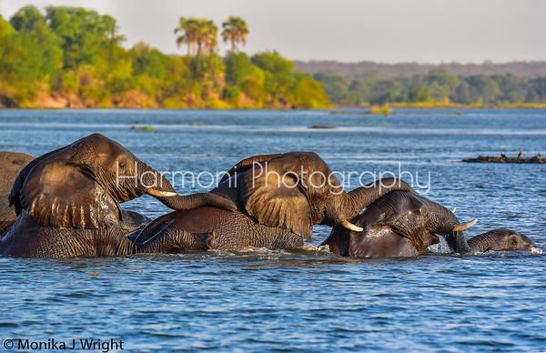 Zimbabwe, Botswana & Uganda 2018- Harmoni Photography