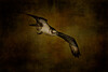 Osprey  _DSC3415