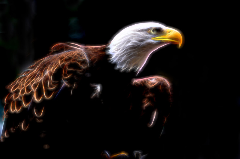 eagle glow _DSC4194