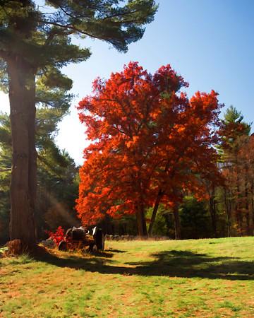 Red Tree in Carlisle
