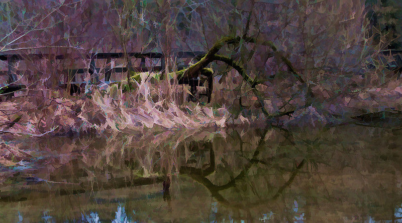 Cheam Circle –Taken in early spring at the Cheam Lake Wetlands Regional Park near Chilliwack, I chose to create a painterly effect. My goal is always to enhance what I see through the lens with a combination of traditional and modern techniques and tools.