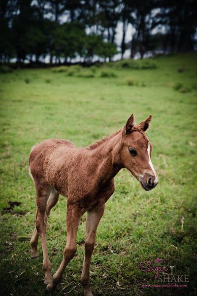 Hāna horses. © 2017 Sugar + Shake