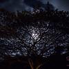 Moon over Hāna. © 2017 Sugar + Shake