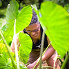 Maui Visitors Bureau's Keli'i Brown tends to the lo'i at Kapahu Living Farm. © 2015 Sugar + Shake