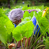 Aunty Tweety Lind works in the lo'i at Kapahu Living Farm. © 2015 Sugar + Shake