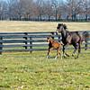 Rachel Alexandra with her first foal, a colt by Curlin born on Jan. 22, at Stonestreet Farm near Lexington, Ky. photographed on Feb. 17, 2012.<br /> RachelAlexandra Origs3 image210<br /> Photo by Anne M. Eberhardt.