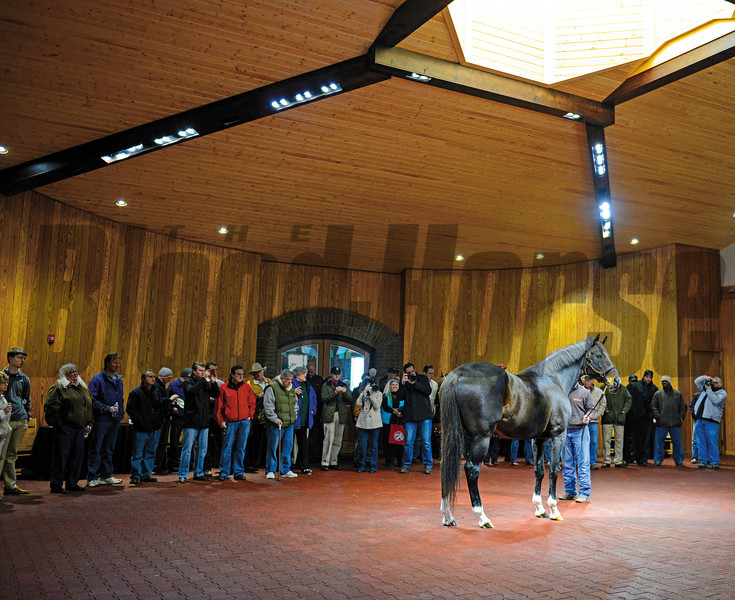 Tiznow being shown by Tony Cecil as the crowd looks on at WinStar Farm near Versailles, Ky.<br /> <br /> Photo by Anne M. Eberhardt