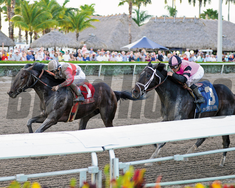 YOUTH SERVED:<br /> Orb gets by Violence in the stretch of the Feb. 23 Fountain of Youth Stakes (gr. II) at Gulfstream Park.<br /> <br /> Photo by: Kenny Martin / Coglianese Photo