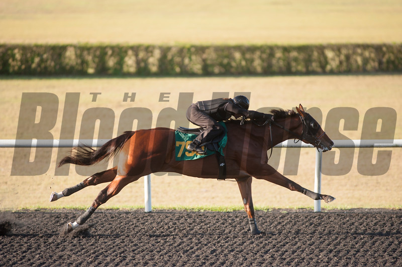 Hip793  Tiznow - Moonbow  Work 9.3  at OBS in Ocala Fl April20 2017<br /> © Joe DiOrio/Winningimages.biz