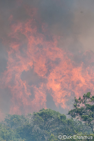 Wild flames with green foilage during bush fire.