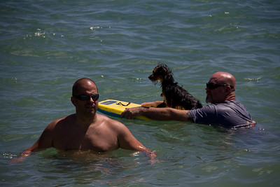 Eddie, Paul, and Chiquita chilling out in the water