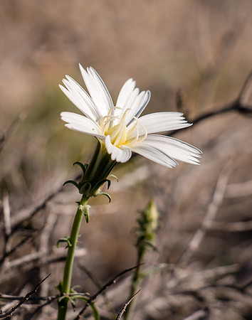 Desert Flowers: March 14, 2017