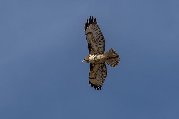 2016, October, Lake Murray birds etc.