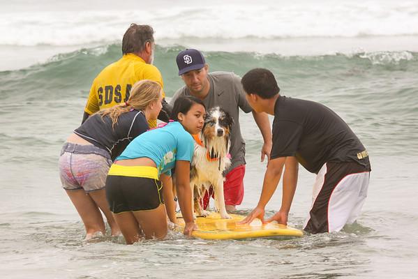 Dog Surfing at Del Mar 2011