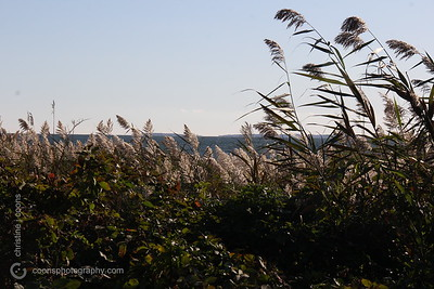 harkness_20151015_0036