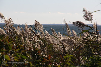 harkness_20151015_0038