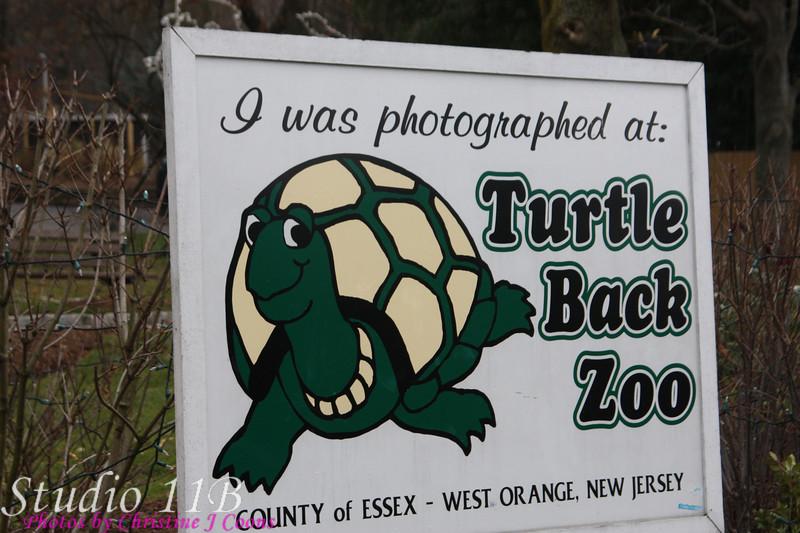 Zoo0811290008