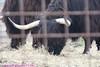 Zoo0811290017