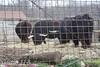 Zoo0811290018