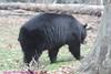 Zoo0811290026