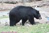 Zoo0811290025
