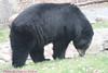 Zoo0811290024