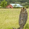 Owl and Barn