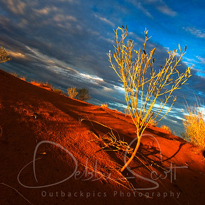 life_on_the_dunes