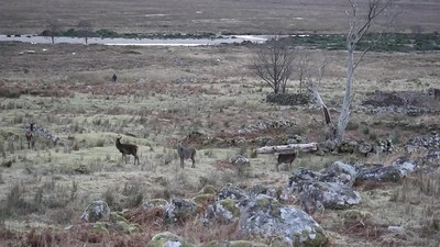 deer on approach to shenavall