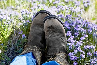 Western Cowboy Boots in a Field of Wild Flowers