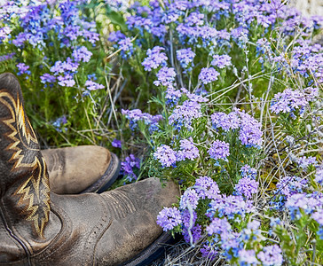 Western Cowboy Boots in a Field of Wild Flowers