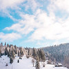 snowy forest mountains