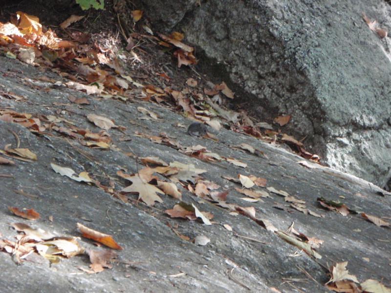 Little mouse taking a climbing break