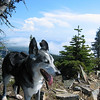 Wild Riley on the summit of Mt Margeret