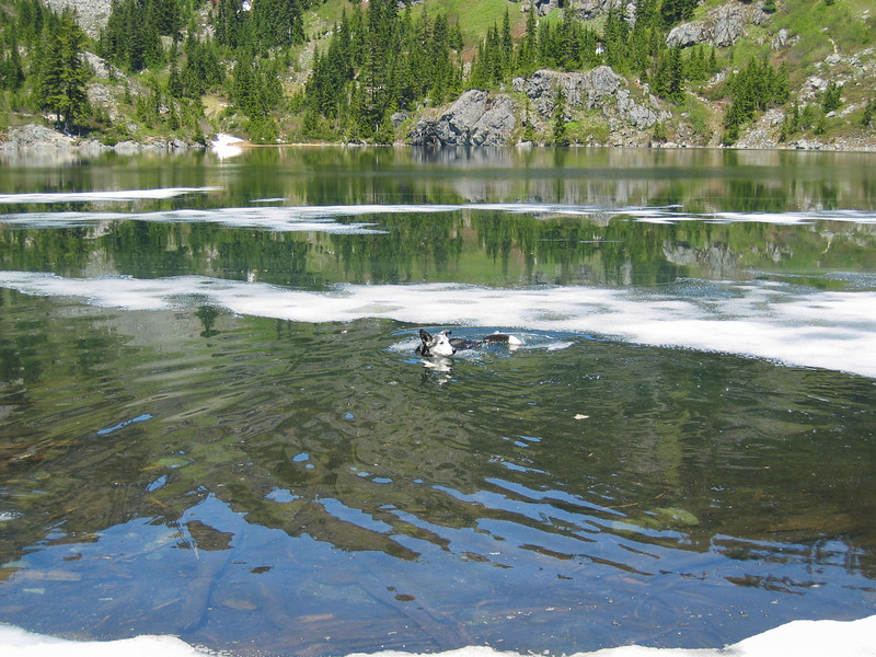 Lunch at Lk Lillian (wild riley goes swimming - note the ice floating on this mountain lake at 4500')