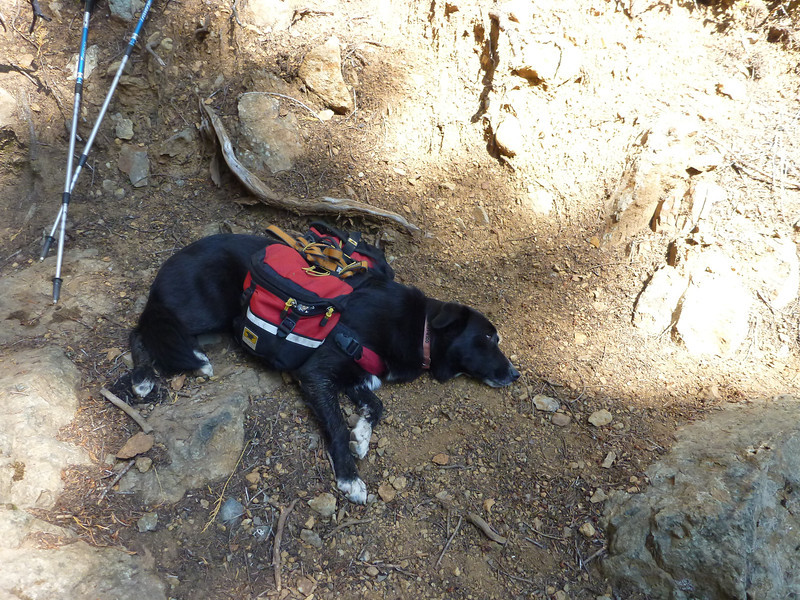 A tired dog is a good dog.  That said, Jilly is simply taking a power nap.  She was a rock star on this trip.