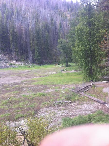 Horses at Big Hidden Lake Shelter