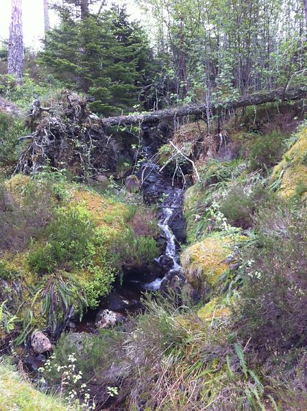 Woods above Fersit