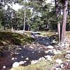 Braemar - Ballochbuie Forrest