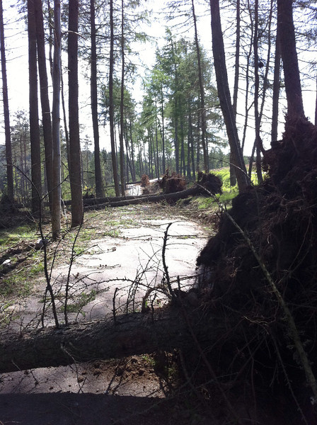 New trail from Potarch to the Slewdrum Forrest (starts in Potarch).   You can see the damage caused by the wind storm